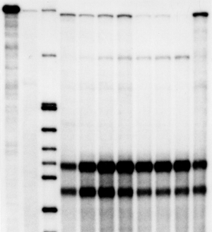 がん細胞の分化とRNAの変化