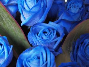 「青いバラ」