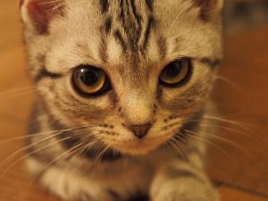 今夜の愛猫